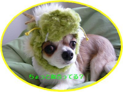 f:id:riku-mama:20111211115501j:image