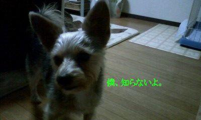 f:id:riku-mama:20120120210157j:image