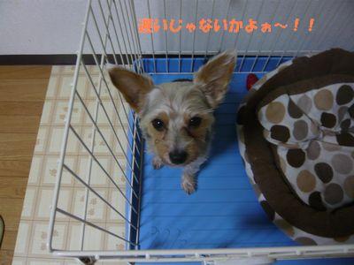 f:id:riku-mama:20120204214948j:image