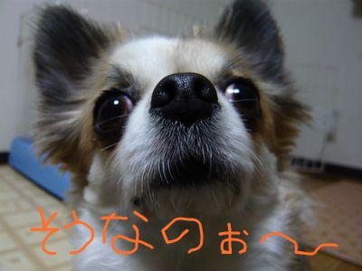 f:id:riku-mama:20120222211109j:image