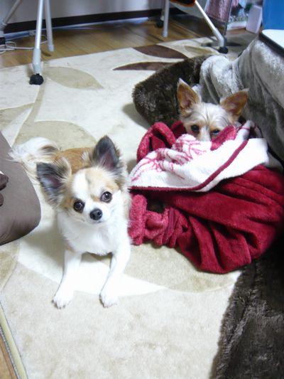 f:id:riku-mama:20120226205426j:image