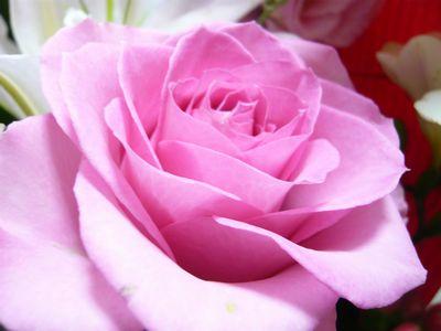 f:id:riku-mama:20120331153951j:image