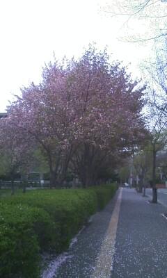 f:id:riku-mama:20120509154754j:image