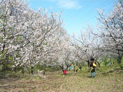 f:id:riku-mama:20120513103259j:image