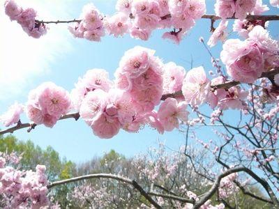 f:id:riku-mama:20120513103933j:image