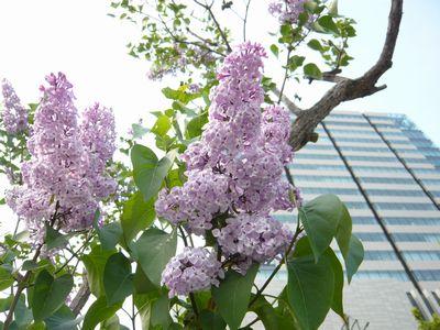 f:id:riku-mama:20120524150340j:image
