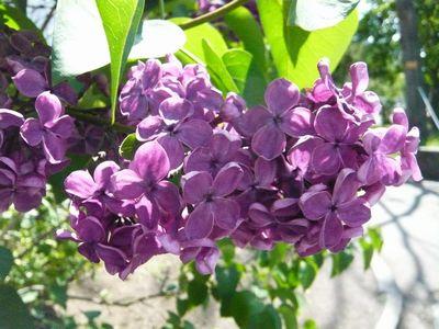 f:id:riku-mama:20120602132651j:image