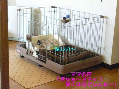 f:id:riku-mama:20120626173312j:image