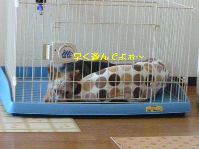 f:id:riku-mama:20120626173337j:image