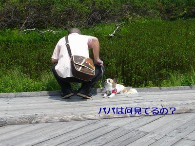 f:id:riku-mama:20120721104224j:image