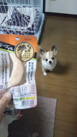 f:id:riku-mama:20160404203537j:image