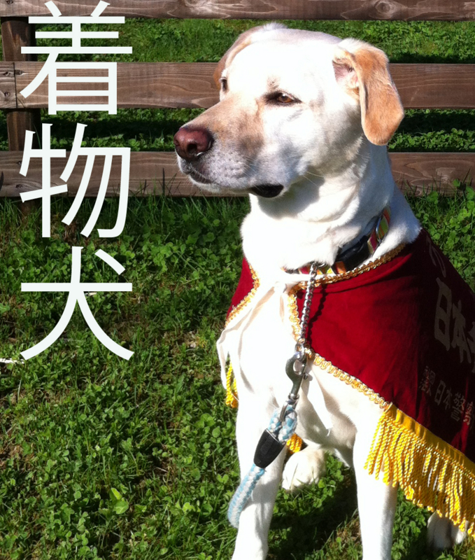 id:yumejitsugen1 profile