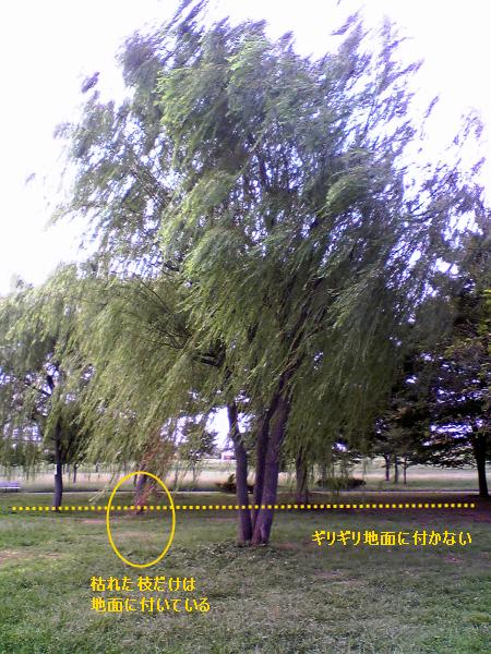 f:id:rikunora:20100925212934p:image