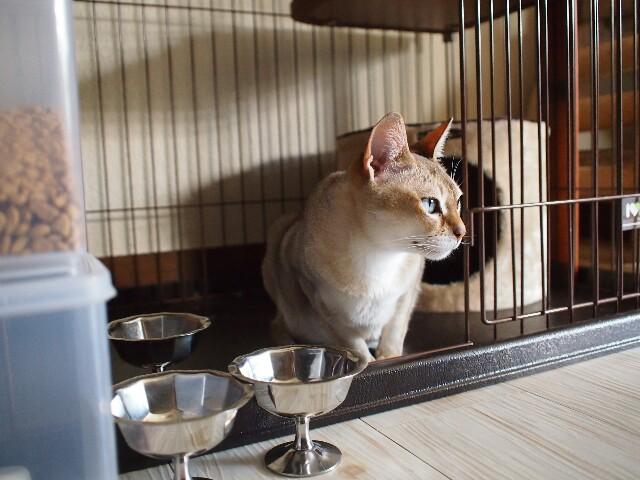 f:id:rikuomofu2:20170505232306j:image