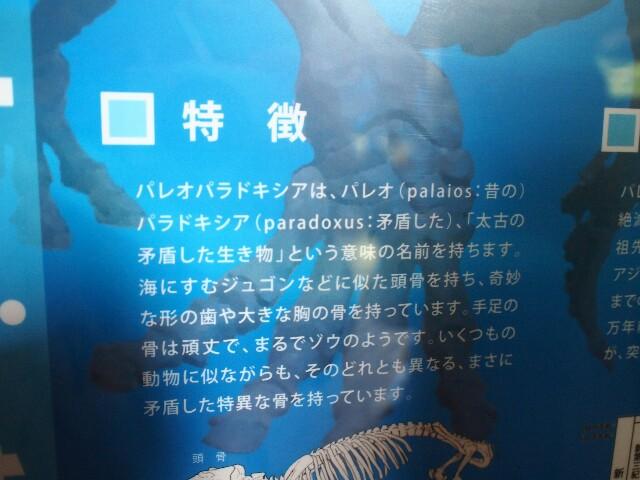 f:id:rikuomofu2:20171018222946j:image