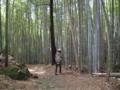熊野古道(波田須の道)