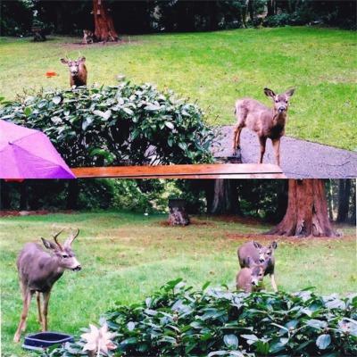 庭にいる鹿