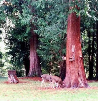 庭の森と鹿たち