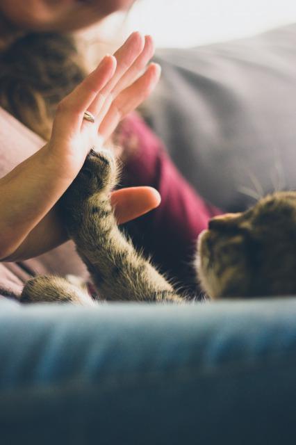 触れ合う人間の手と猫の手
