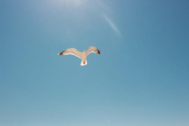 飛んでいる鶴