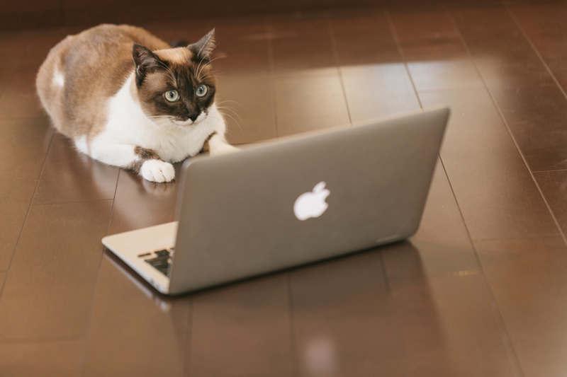 パソコンを見つめる猫