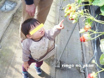 f:id:ringo_co:20170209115321j:plain