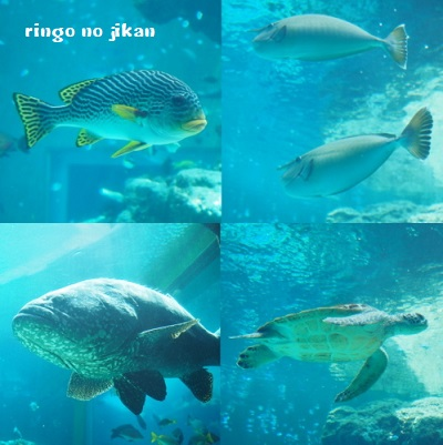 f:id:ringo_co:20180408013221j:plain