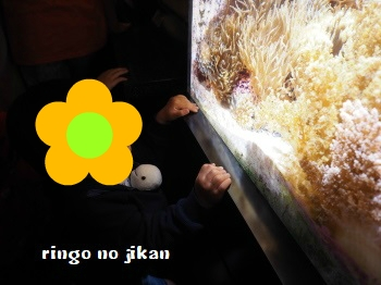 f:id:ringo_co:20180408013540j:plain