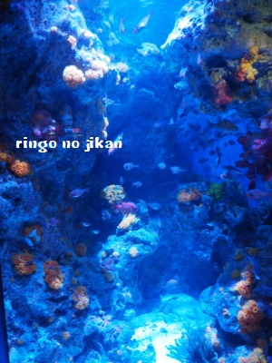 f:id:ringo_co:20180408013622j:plain