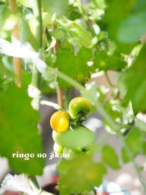 f:id:ringo_co:20180704052945j:plain