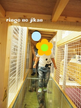 f:id:ringo_co:20180705054432j:plain