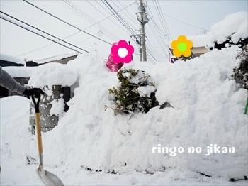f:id:ringo_co:20190222061535j:plain