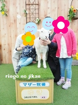 f:id:ringo_co:20190406002603j:plain