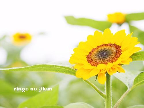 f:id:ringo_co:20190801001159j:plain