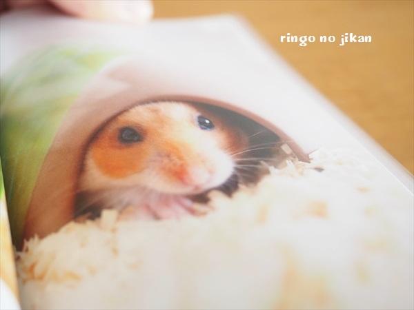 f:id:ringo_co:20191121235525j:plain