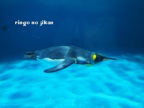 f:id:ringo_co:20191210130429j:plain