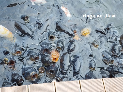 f:id:ringo_co:20191210131445j:plain