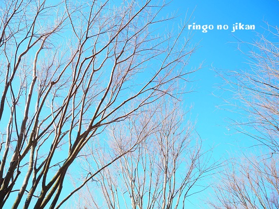 f:id:ringo_co:20200228083756j:plain
