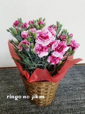 f:id:ringo_co:20200414213155j:plain