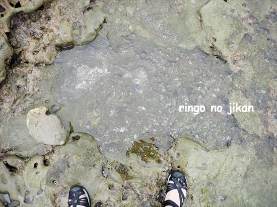 f:id:ringo_co:20201020141444j:plain