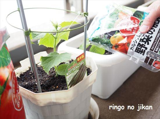 f:id:ringo_co:20210505215619j:plain