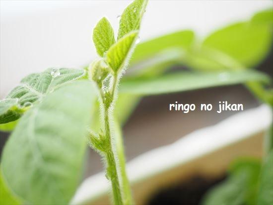 f:id:ringo_co:20210517133628j:plain