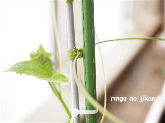 f:id:ringo_co:20210517134118j:plain