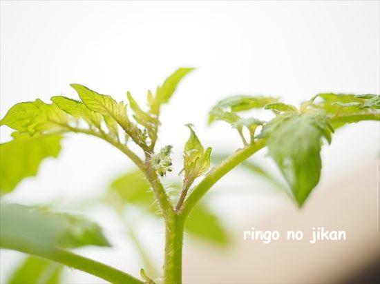 f:id:ringo_co:20210517134156j:plain