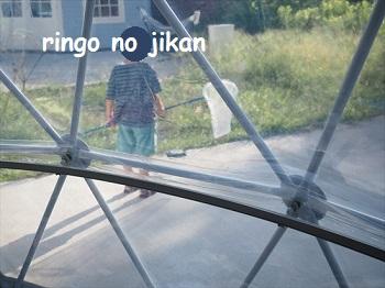 f:id:ringo_co:20210814231630j:plain
