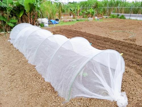 畑の防虫ネット