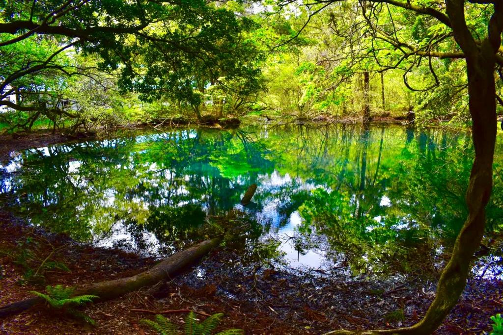 一眼レフ(Nikon D3400)を買った話と山形県の秘境''丸池様''で初撮影