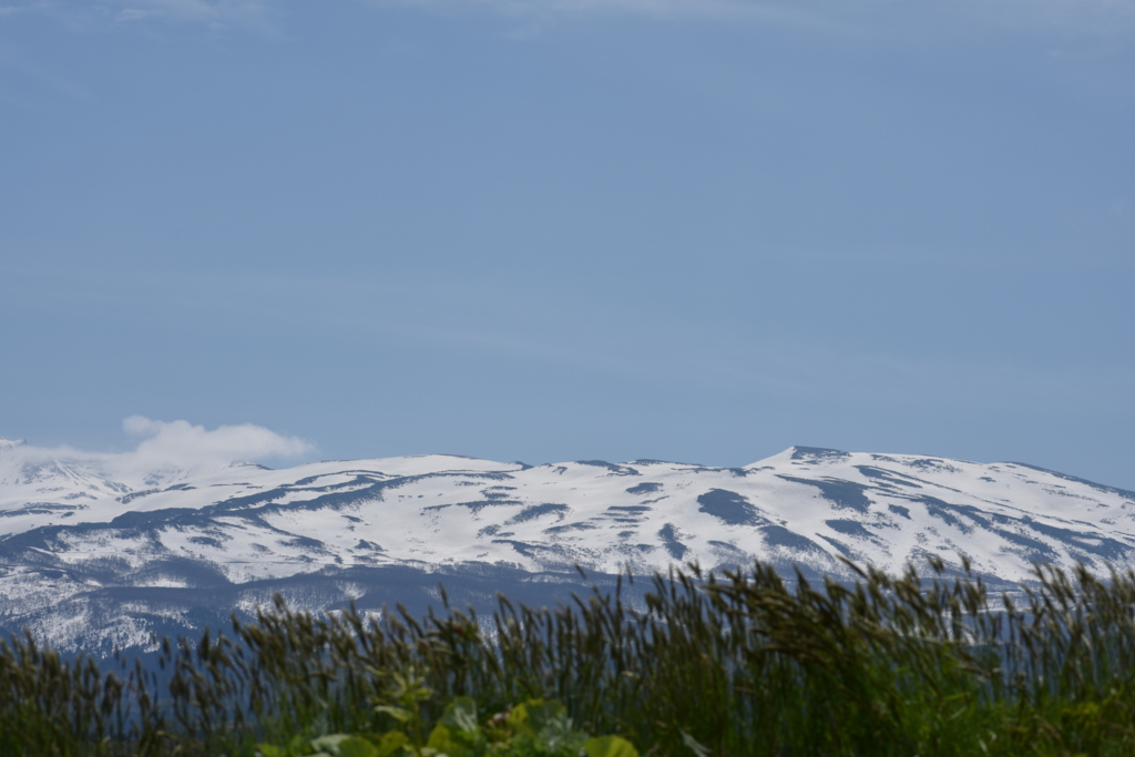 番外編:山形県の霊峰鳥海山とタンポポ