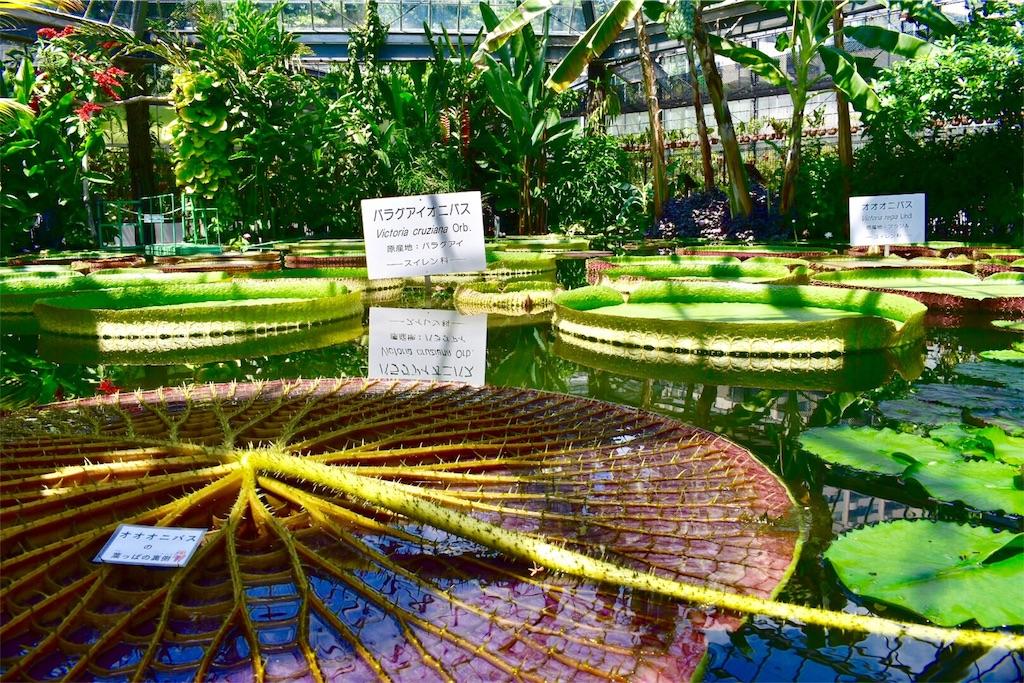 熱川バナナワ二園 [植物園]