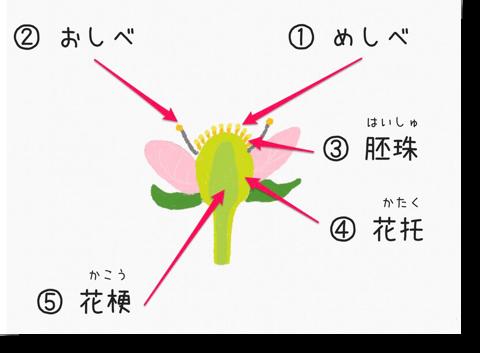 イチゴの花と茎
